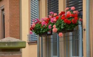 decorar terraza o balcón, las plantas