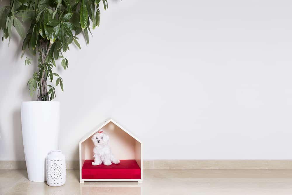 mobiliario multifuncional para perros