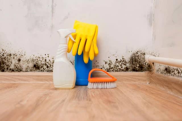 Cómo acabar con el moho en las paredes