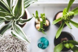 plantas interior faciles
